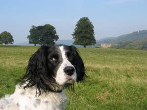 Molly at Chatsworth