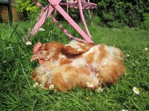 Agnes sunbathing