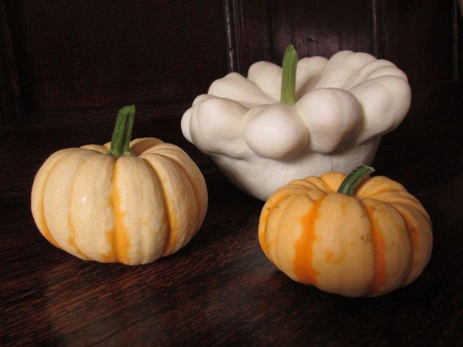 Mulberry Cottage 15 squashes